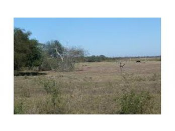 Vendo 9 hectáreas a 15 km de Cerrito