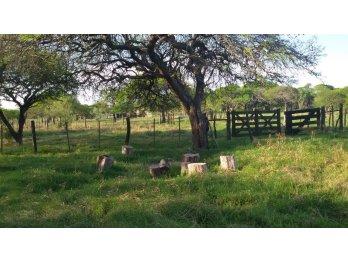 VENDO Campo 537Ha a orillas del Arroyo Saladillo
