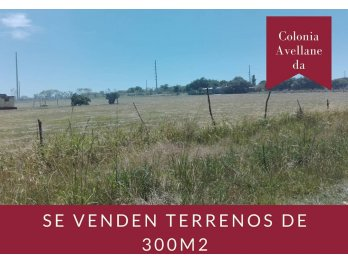 SE VENDEN TERRENOS EN COLONIA AVELLANEDA